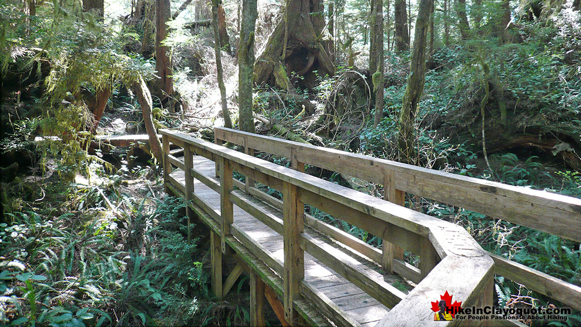Hot Springs Cove Trail Bridge