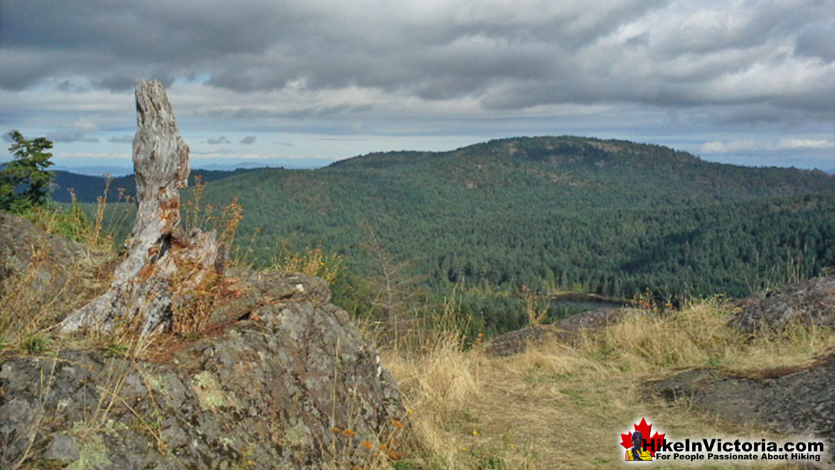 Lone Tree Hill Hike Victoria
