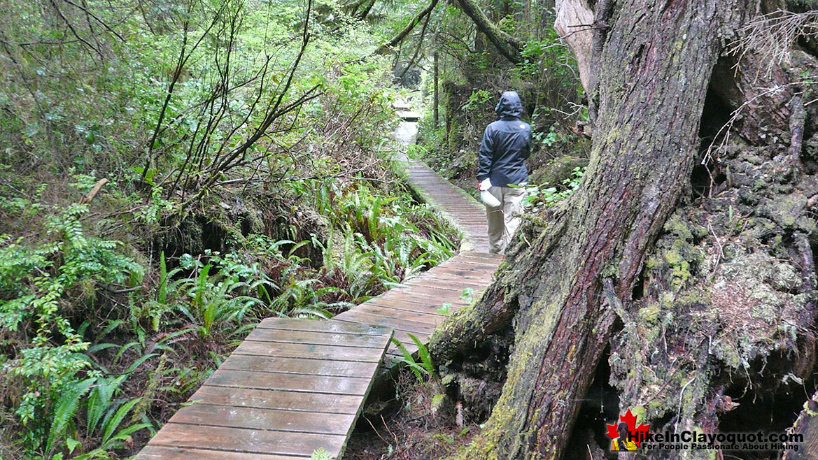 Nuu-Chah-Nulth Trail